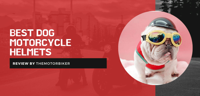 Best Dog Motorcycle Helmets – What Do Pet-Tech Experts Say?